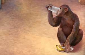 Monkey with a banana peel